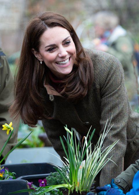flower, smile, plant, grass, botany, grass family, spring, iris, floristry, floral design,