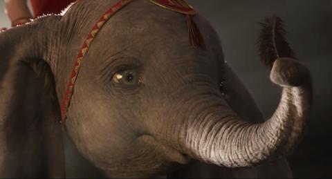 Elephants and Mammoths, Elephant, Terrestrial animal, Indian elephant, African elephant, Wildlife, Snout, Organism, Working animal,
