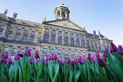 Amsterdam cruise - Dutch National Tulip Day in Amsterdam
