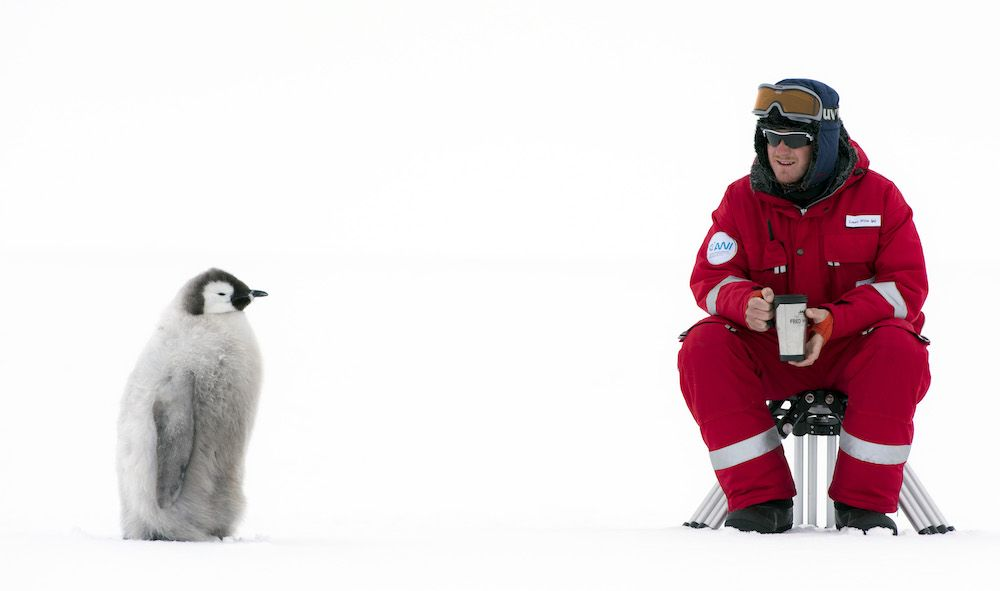 Dynasties penguins photos
