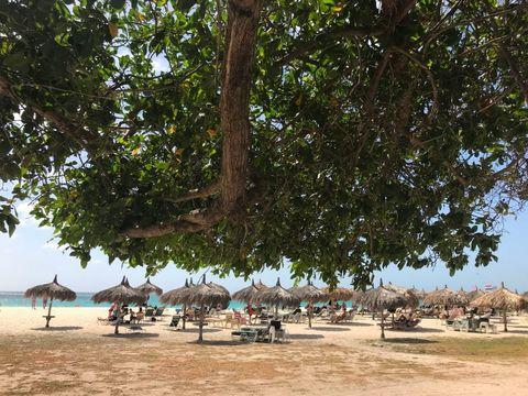 Tree, Beach, Vacation, Woody plant, Tourism, Shade, Leisure, Plant, Adaptation, Resort,