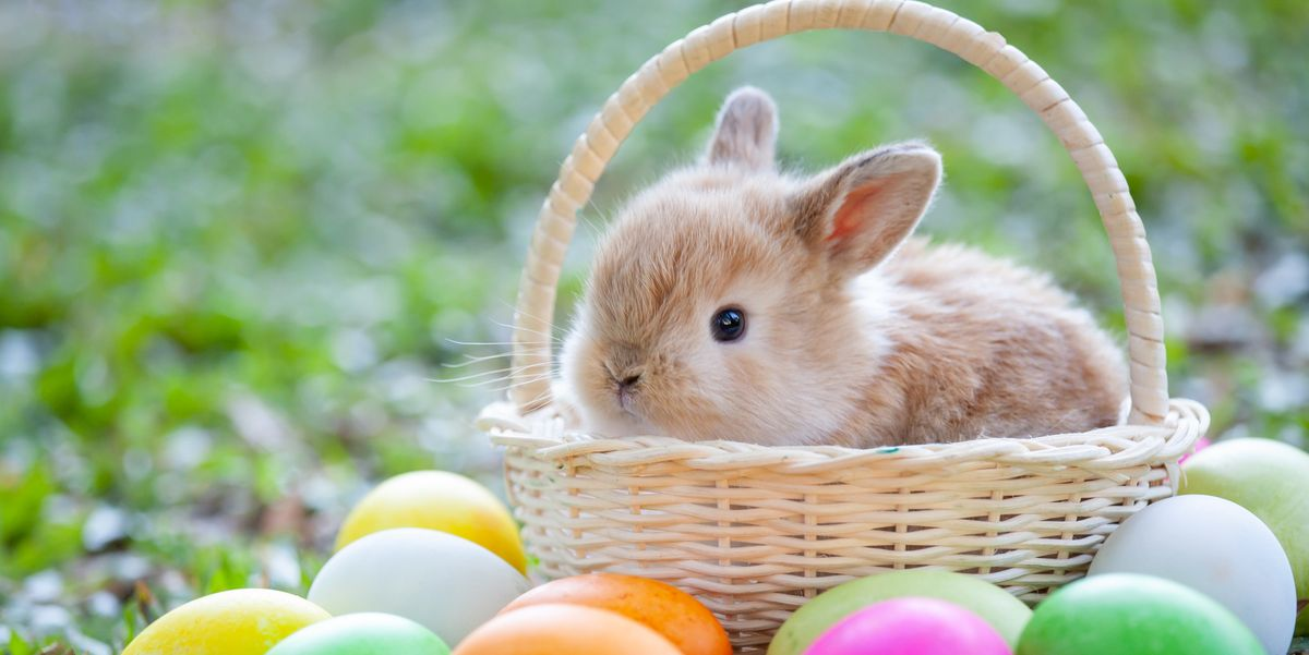 Where Did the Easter Bunny Come From? - Easter Bunny Origins