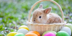 easter bunny origins