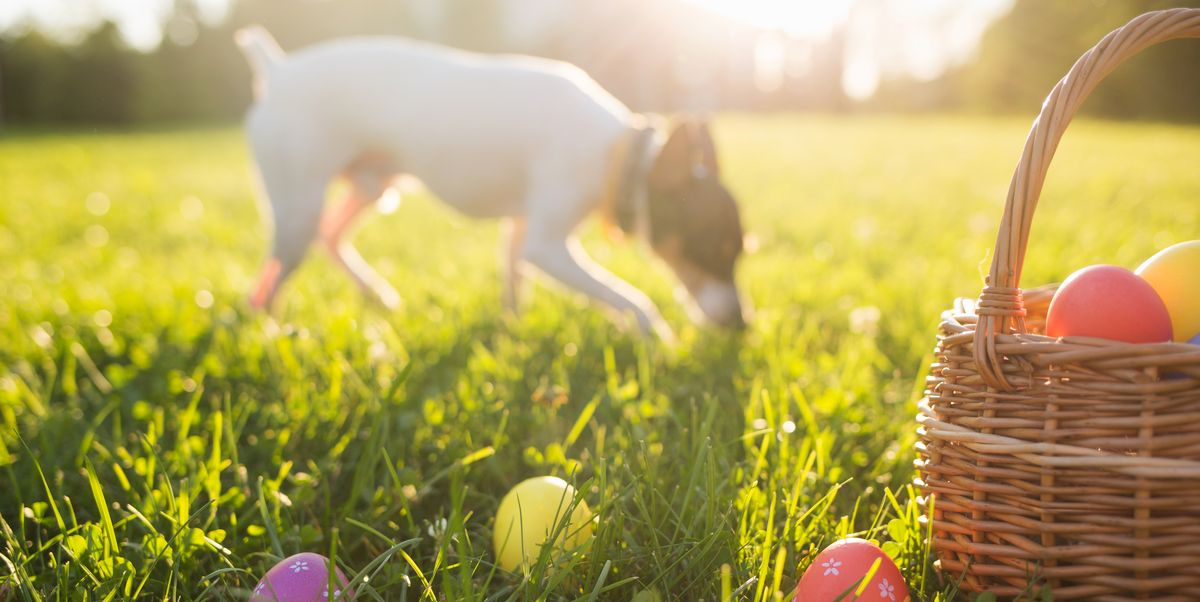Dog-friendly recipe: How to make tasty Easter cakes for your dog