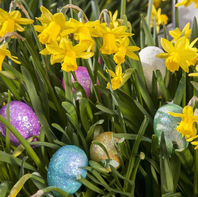 easter eggs hidden among small flowering daffodils