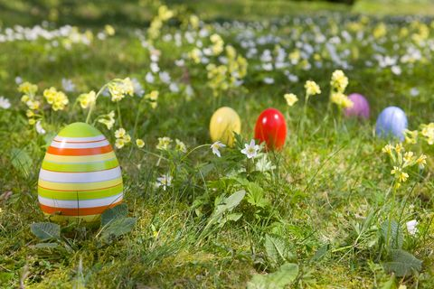easter eggs, spring flowers in grass