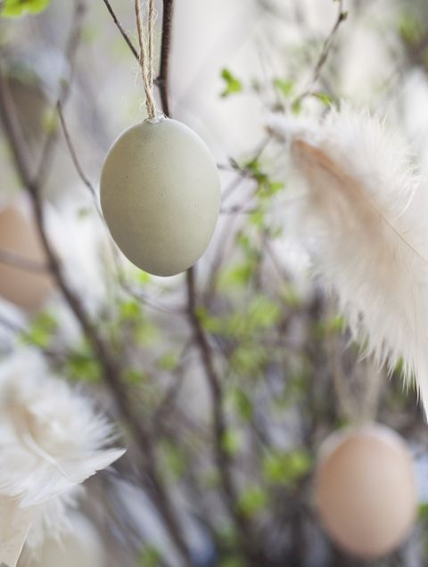 Easter eggs with feather