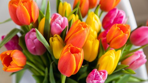 easter zoom backgrounds tulips
