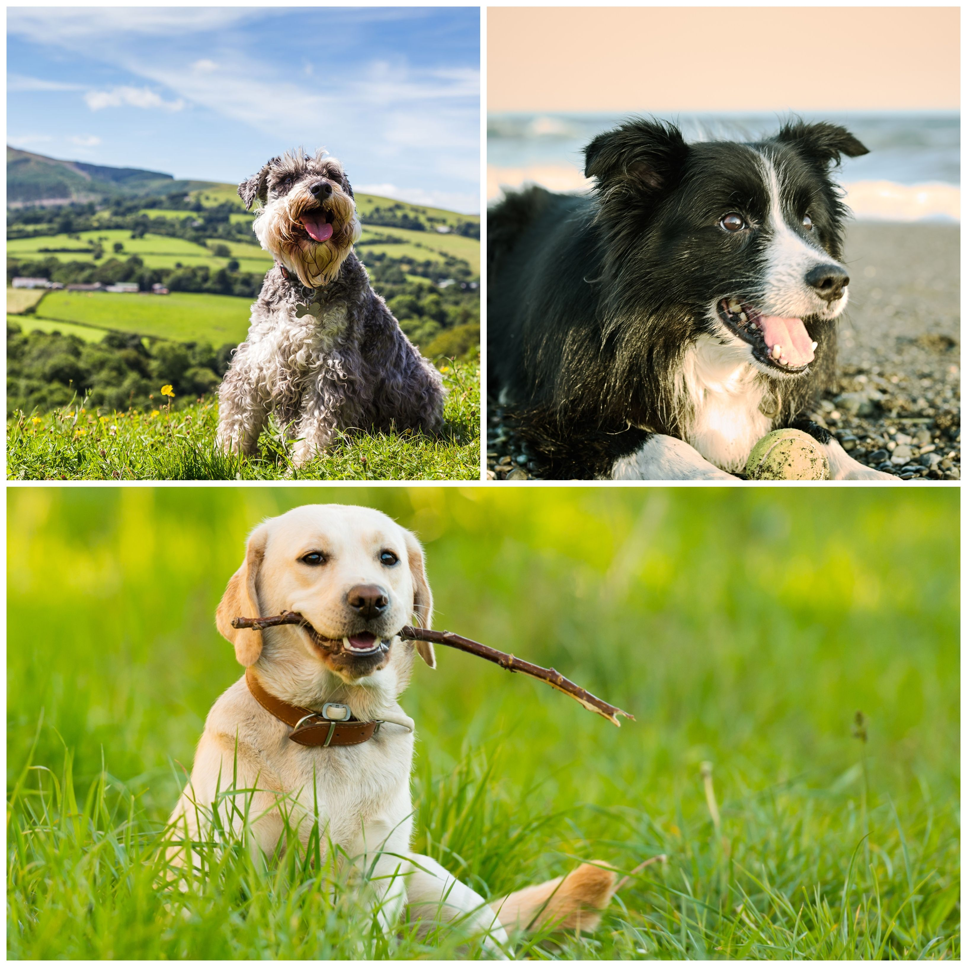 6 Dog Breeds That Are Easy To Train How To Train A Dog