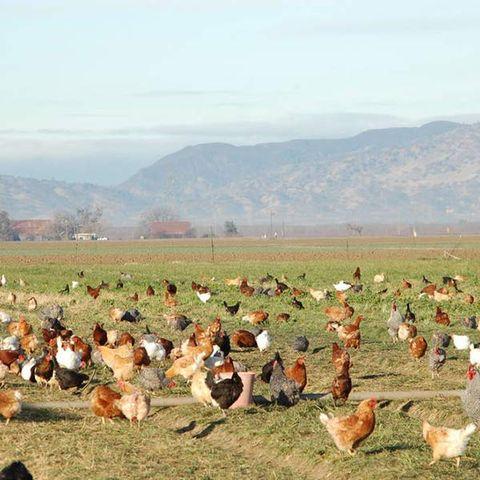 Eatwell Farm