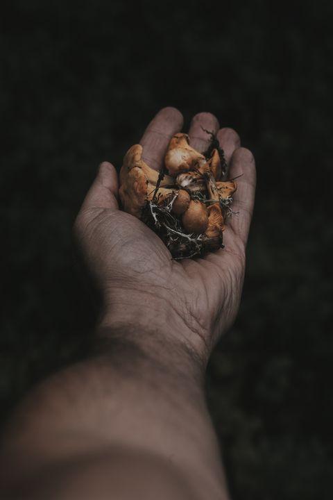 Hand, Finger, Nut, Plant, Still life photography,