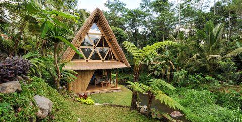 Vegetation, Natural landscape, Nature reserve, Jungle, Botany, House, Tree, Rainforest, Forest, Hut,
