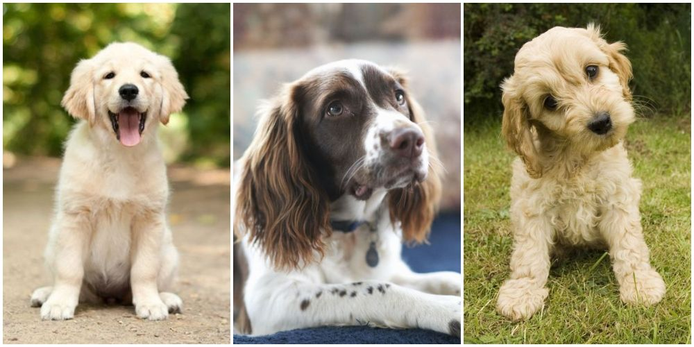 Favourite Dogs Names Our Top 100