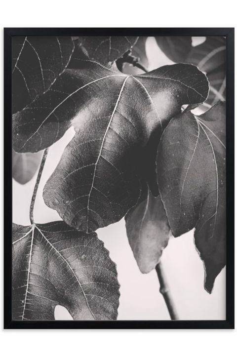 Leaf, Black-and-white, Monochrome photography, Tree, Plant, Flower, Branch, Botany, Woody plant, Photography,