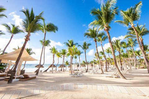 Tree, Palm tree, Vacation, Sky, Arecales, Tropics, Caribbean, Beach, Ocean, Resort,