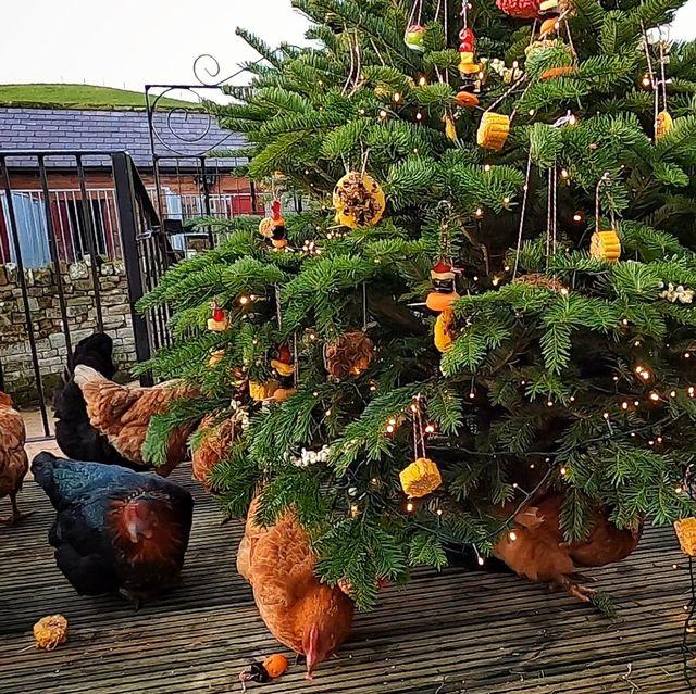 Countryfile's Hannah Jackson Decorates Edible Christmas Tree On Farm