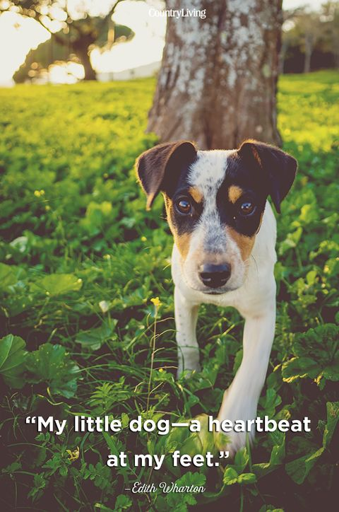 Edith Wharton Dog Quote