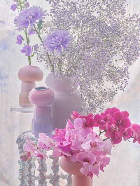 bloementrend dreamland