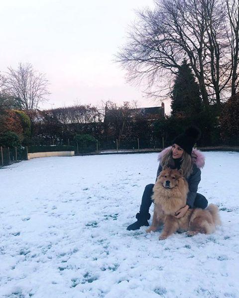 Dog, Canidae, Snow, Winter, Dog breed, Sky, Carnivore, German shepherd dog, Sporting Group, Freezing,