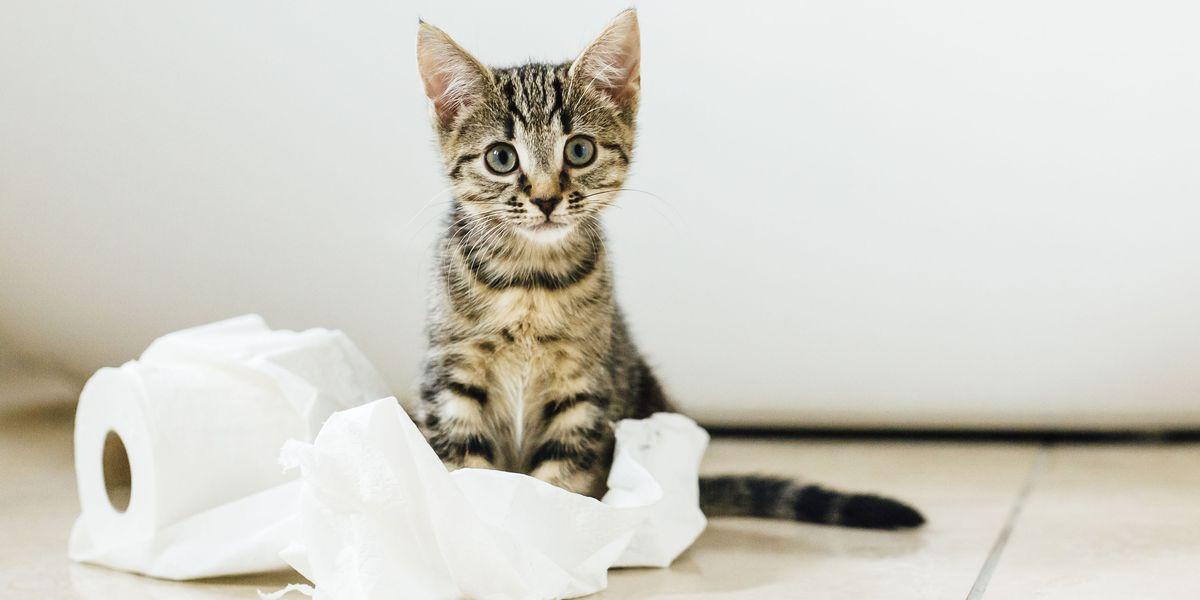 How To Get Rid Of Cat Smell On