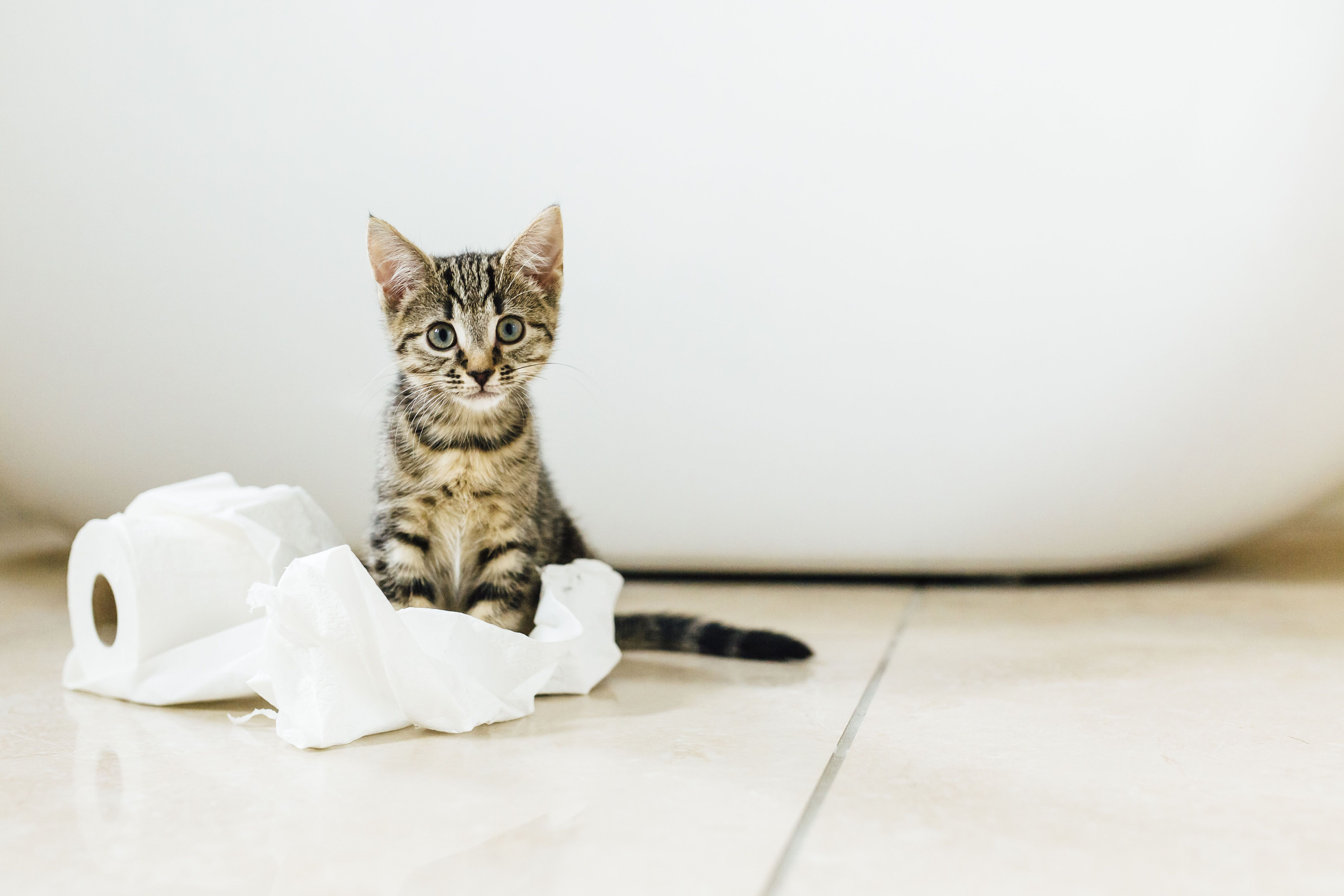 Superbe How To Get Rid Of Cat Pee Smell