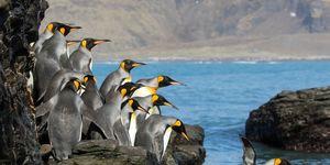 eiland-vol-pinguins-kopen