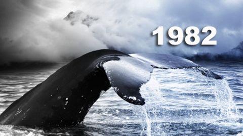 einde-walvisvangst