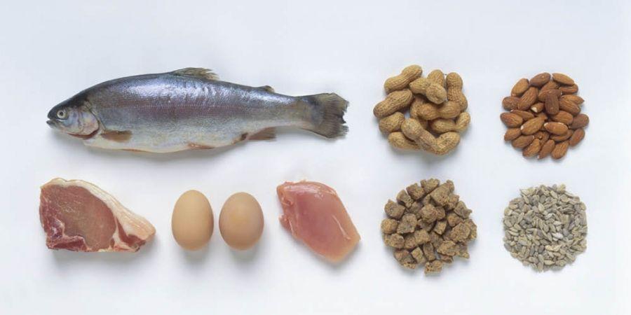 veel eiwitten eten