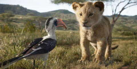 Vertebrate, Wildlife, Terrestrial animal, Bird, Beak, Ecoregion, Adaptation, Grassland, Safari, Savanna,