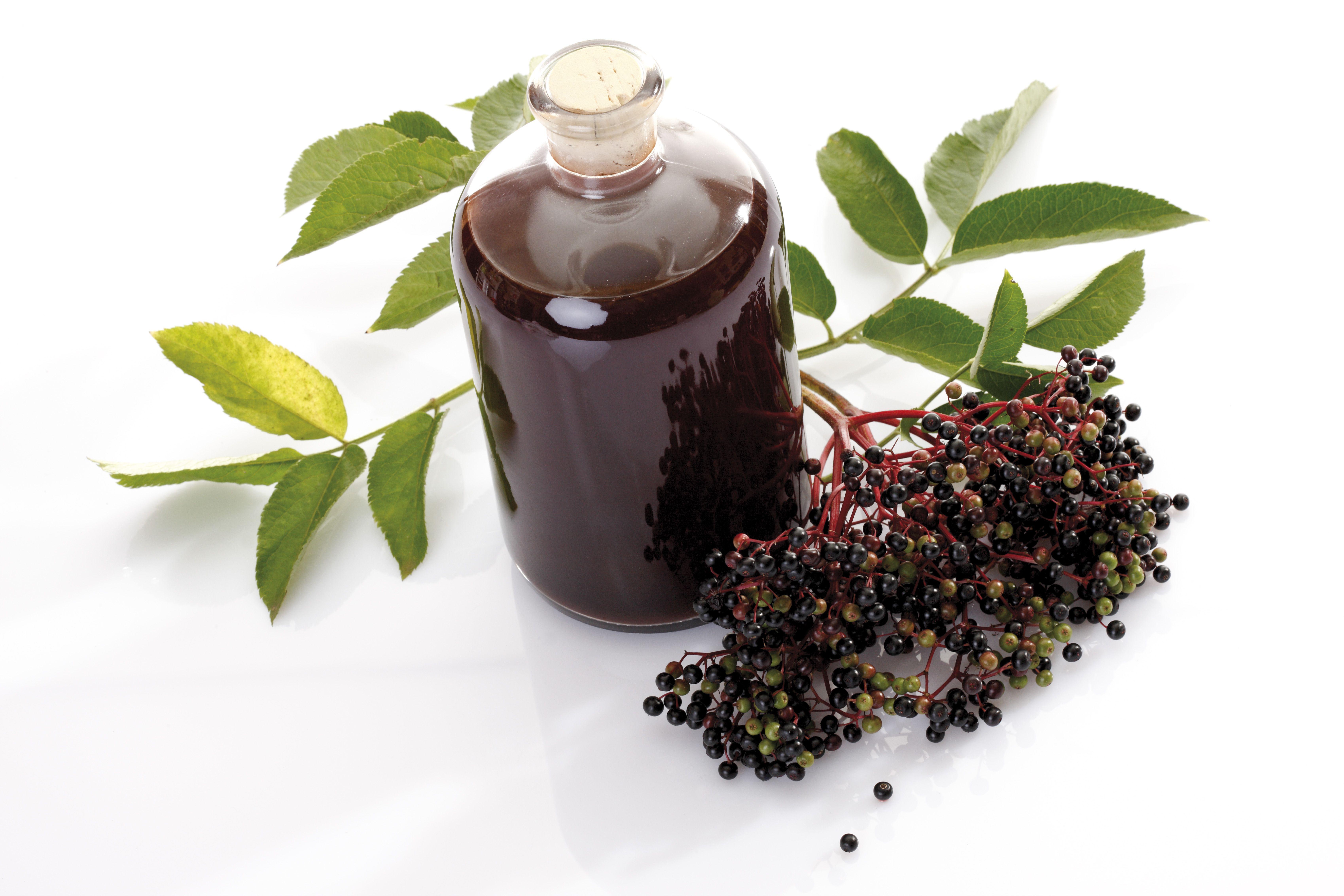 Elderberry wine and black elder (Sambucus nigra), elevated view