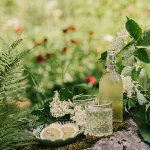 Elderflower cordial juice lemonade