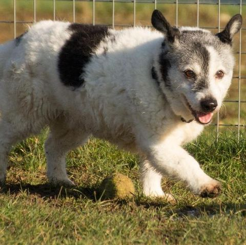 Elderly dog looking for a home