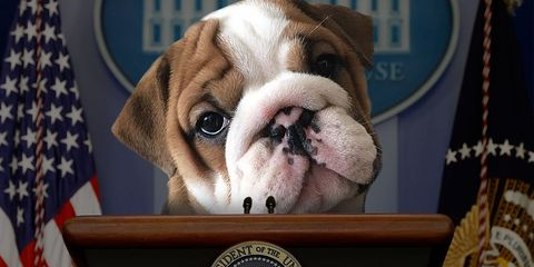 election puppies