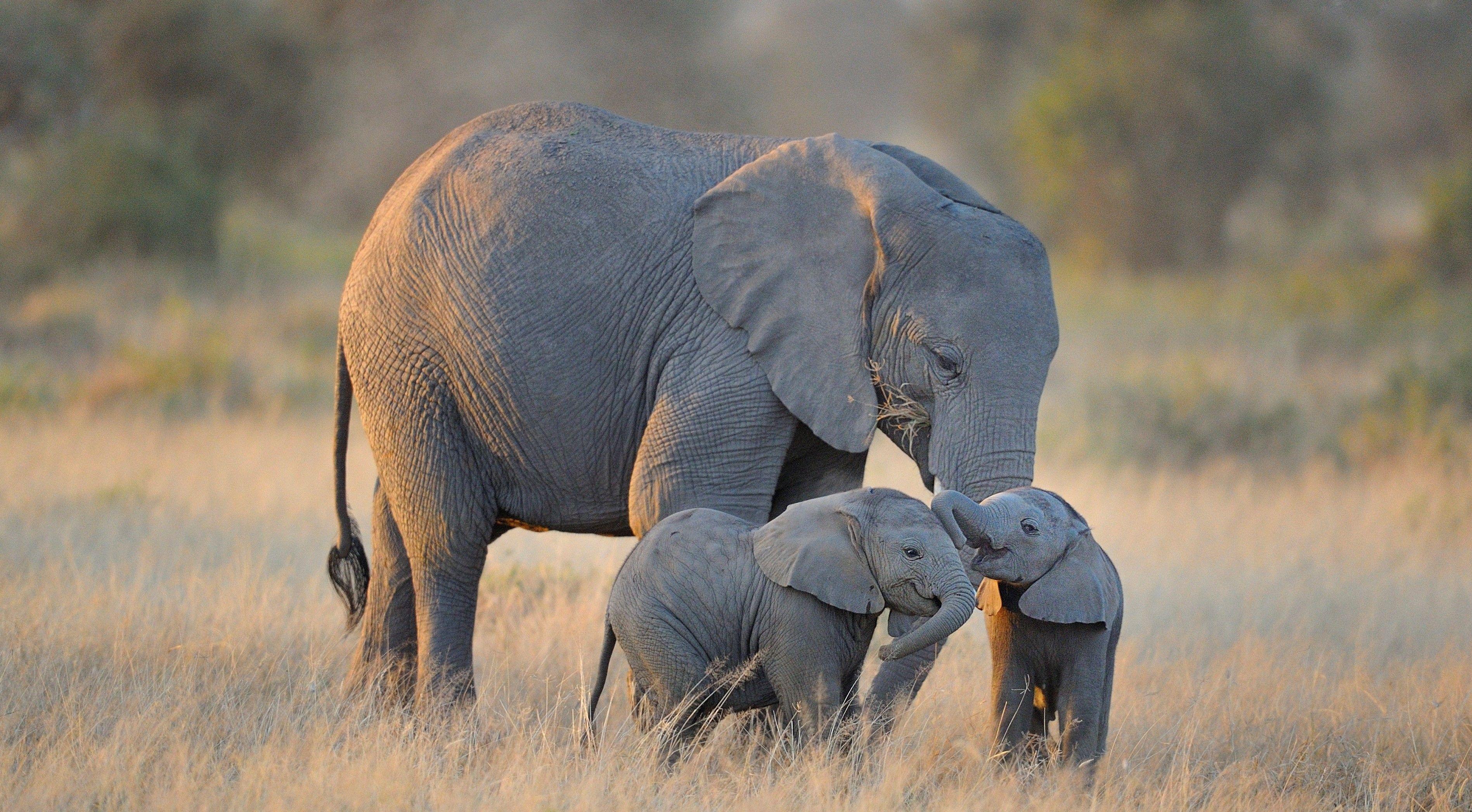 In Thailandia 78 elefanti sono stati lasciati liberi per sempre e (senza dubbio) è la good news della settimana