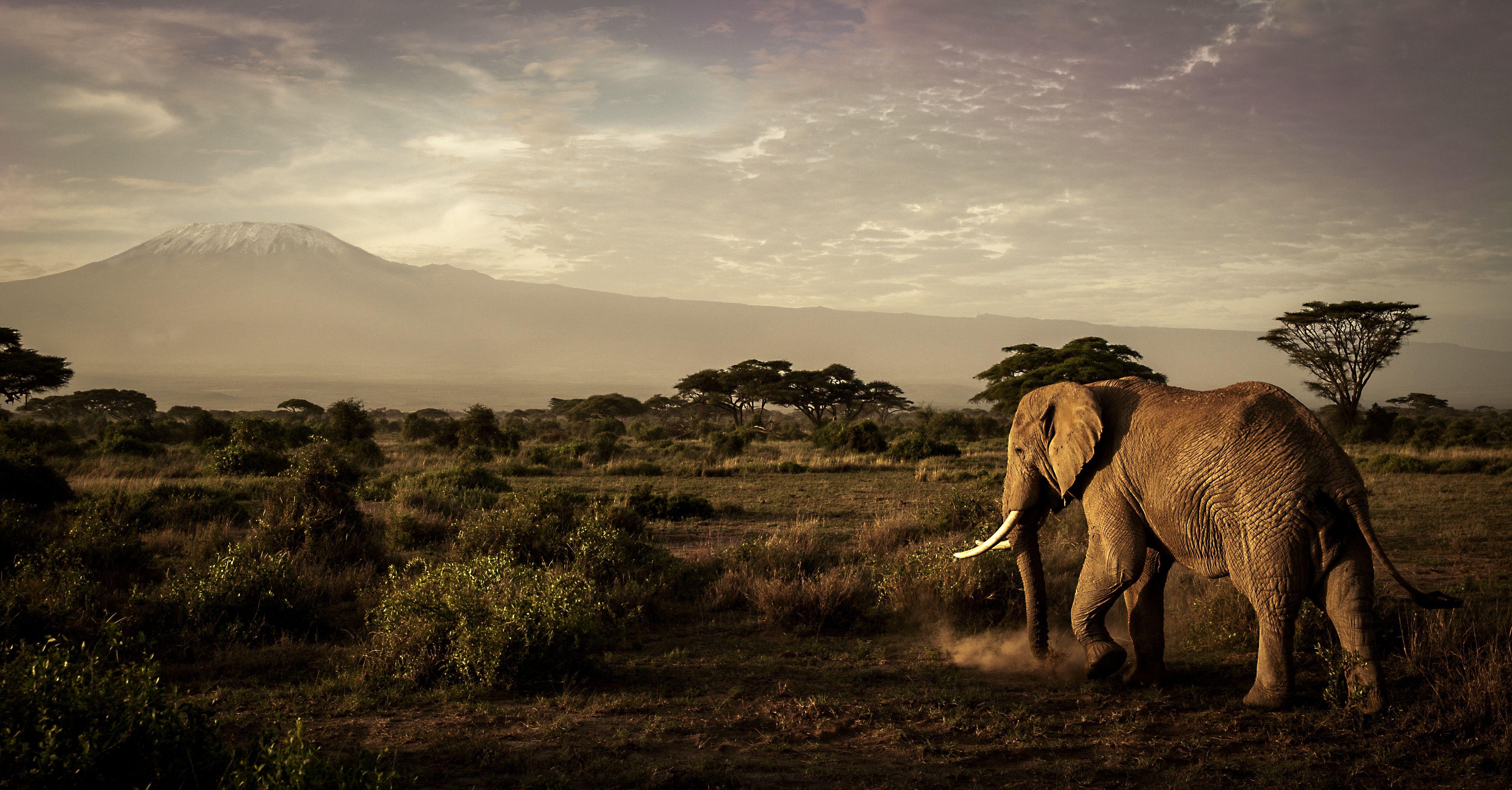 Elephants can feel empathy.