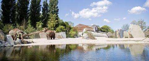 netherlands zoo animal elephant