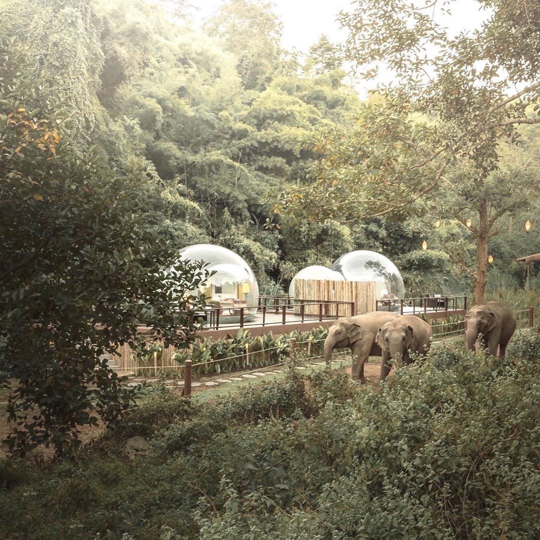 "You Can Stargaze and Sleep Near Elephants in These Clear ""Jungle Bubbles"" in Thailand"