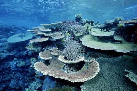Elevated water temperatures from global warming or an El Nino can kill much of the coral, leaving behind only the 'bleached' white coral skeleton, Cocos Island, Pacific Ocean