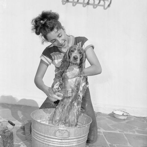 Young Actress Elizabeth Taylor Bathing Her Dog