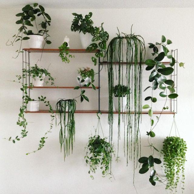 Las 8 plantas colgantes m s bonitas para convertir tu casa - Plantas colgantes interior ...