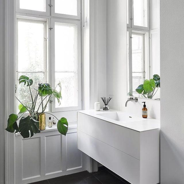 elle-plantas-para-el-baño