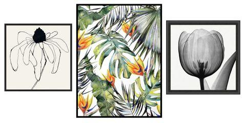 Flower, Plant, Botany, Black-and-white, Wildflower, Protea, Modern art, Art, Fritillaria, Illustration,