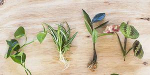 Planten gefotografeerd door Iris van Vliet