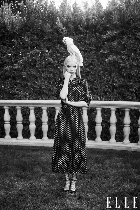 anya taylor joy with parrot for elle