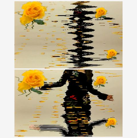 petra cortright yellow_rose