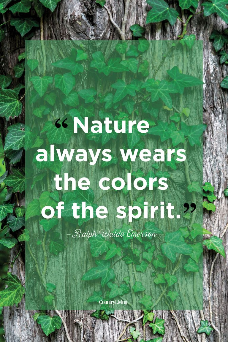 Inspirational Sayings About Nature