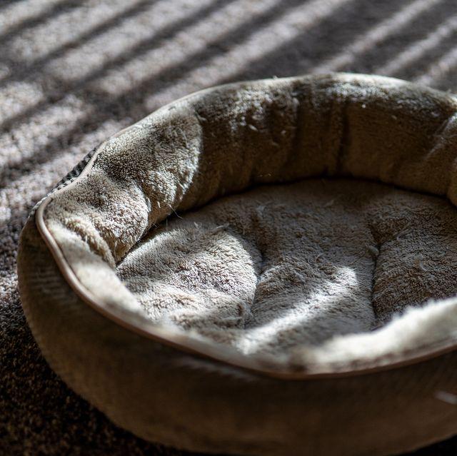 empty dog bed