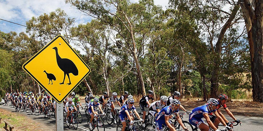 Emu Cyclists