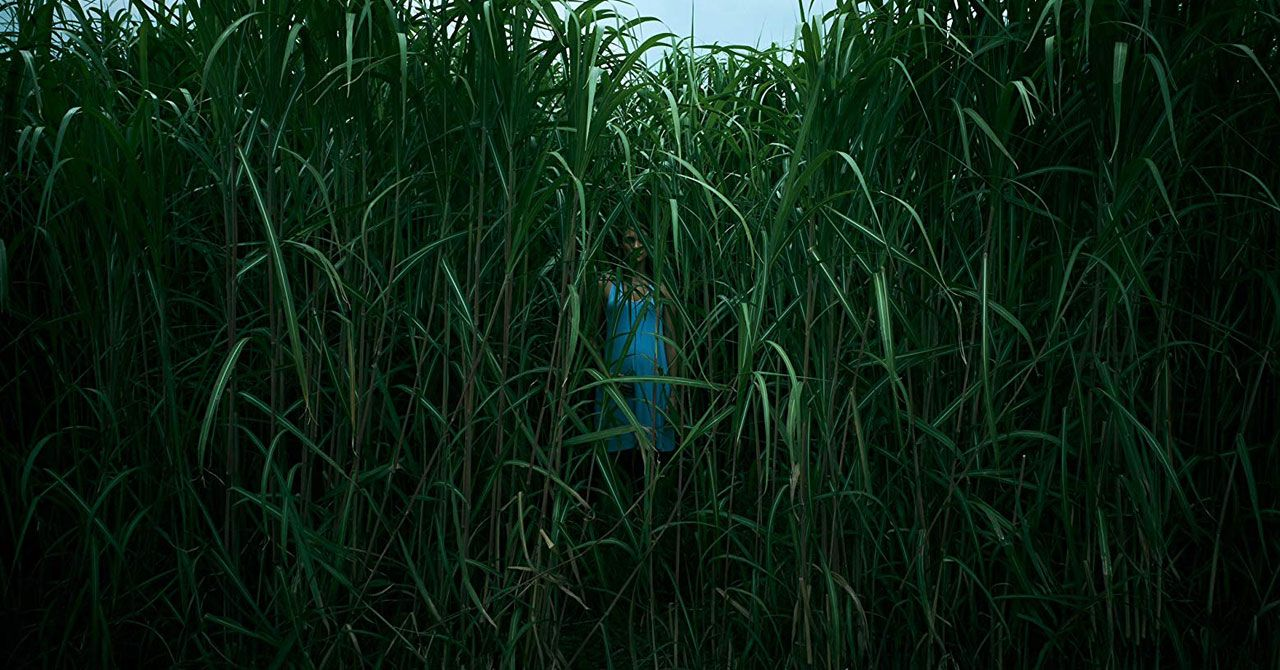 Todo sobre la película En la hierba alta