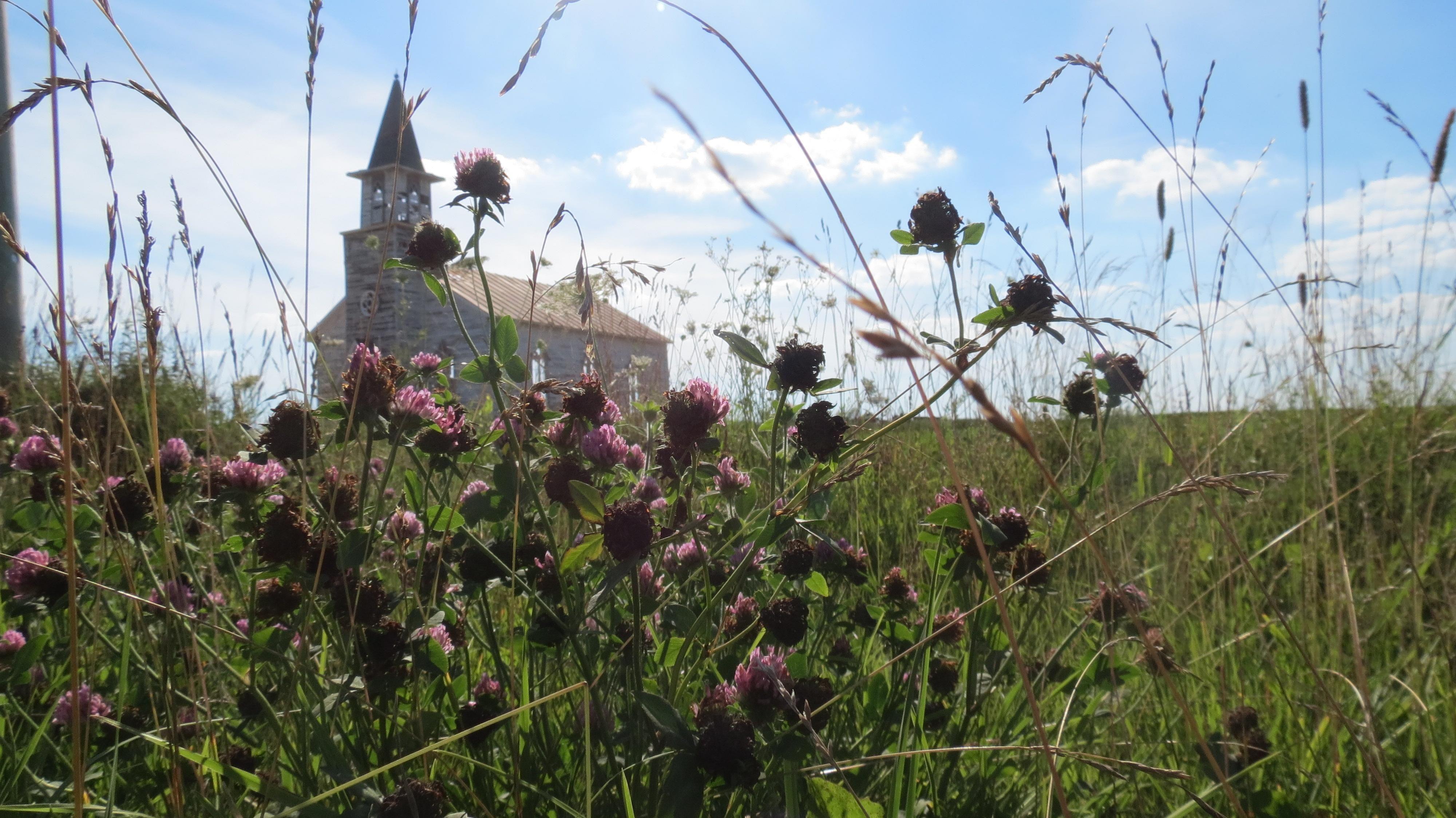 'En la hierba alta' inaugurará Sitges